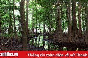 Tăng cường các biện pháp bảo vệ 3 loại rừng