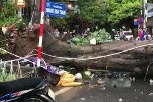 Hà Nội: Xác định danh tính thanh niên trú mưa bị cây đổ tử vong