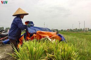 Nông dân Nghệ An, Hà Tĩnh hối hả thu hoạch lúa hè thu chạy bão số 4