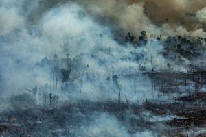 Giới trẻ ngờ nghệch, kiến thức nông cạn, lầm tưởng cháy rừng thành cháy công ty Amazon