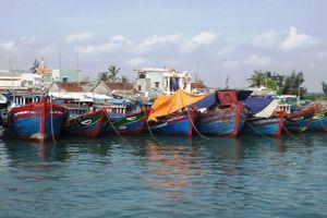 Quảng Ngãi: Hơn 6.000 ngư dân còn ở ngoài khơi