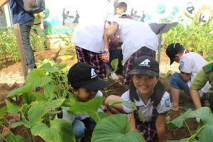 Một trường tiểu học trồng cây thay thế mật gấu