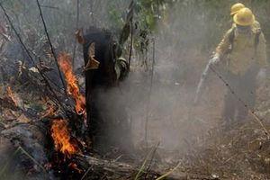 Điều gì sẽ xảy ra nếu Amazon không được cứu?