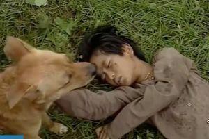 Chú chó mang lựu đạn cứu Tư 'Võ Tòng' gây xúc động ở 'Đất phương Nam'