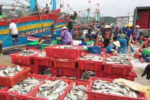 Vào bờ tránh bão, ngư dân Bãi Ngang vẫn có khoang thuyền đầy ắp cá