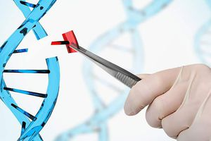 WHO tăng cường giám sát hoạt động nghiên cứu chỉnh sửa gien người