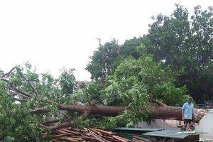 Hiện trường tan hoang sau lốc xoáy kinh hoàng tại Nghệ An