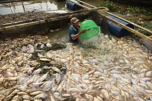 Kết luận những sai phạm về môi trường của Công ty Trách nhiệm hữu hạn AB Mauri Việt Nam