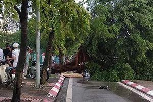 Một thanh niên thiệt mạng do cây đổ tại Hà Nội