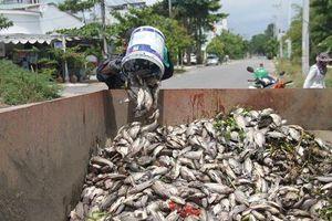Đến bao giờ cá mới ngừng chết tại các hồ điều tiết Đà Nẵng?