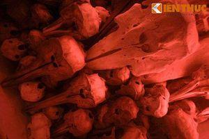 Hàng chục bộ xương kỳ lạ trong ngôi đình cổ
