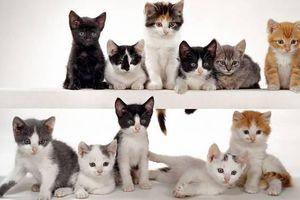 Walter Chandoha - một nhiếp ảnh gia chụp hơn 90.000 tấm hình về mèo