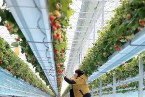 Hàn Quốc đầu tư 203 triệu USD phát triển nông trại thông minh