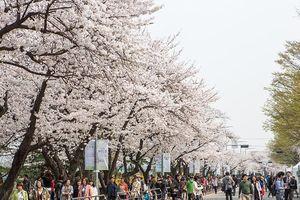 Hàn Quốc giới thiệu xu hướng du lịch mới cho người Việt Nam