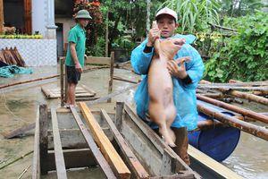Người Hà Tĩnh ôm lợn chạy lũ