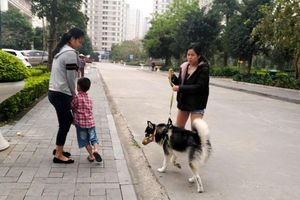 Cử tri Hoàng Mai kiến nghị có chế tài xử phạt nghiêm việc nuôi chó thả rông