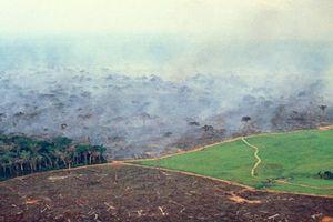 Rừng Amazon đã bị tàn phá ra sao theo thời gian?