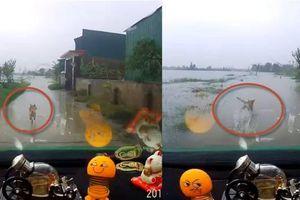 Clip tài xế taxi rượt chó vàng chạy thục mạng, nhảy xuống sông ở Hà Tĩnh