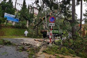 Mưa lốc khiến nhiều nhà dân ở Lâm Đồng bị tốc mái, cây xanh bật gốc