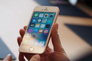 Tin đồn Apple ra iPhone giá rẻ mới, kích cỡ như iPhone 8
