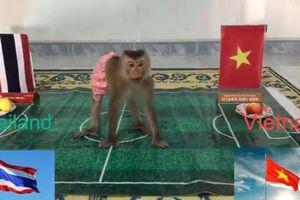 'Nhà tiên tri' động vật dự đoán Việt Nam thắng Thái Lan tại Vòng loại WC 2022