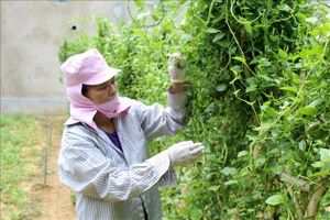 Sản xuất, kinh doanh thực phẩm an toàn ở huyện miền núi Quan Hóa