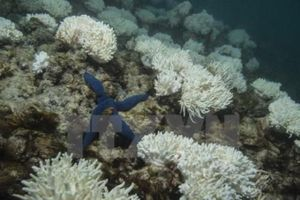 Đại dương sẽ là kẻ thù nguy hiểm nhất của con người?