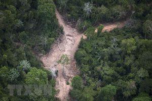 Giáo hoàng Francis: Phá rừng đang đe dọa tương lai toàn cầu