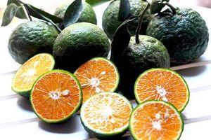 Người bán cam không muốn bạn biết điều này: Lướt qua biết cam tươi ngon, mọng nước không hóa chất
