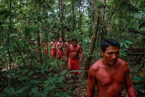 Thổ dân Waiapi và cuộc chiến sinh tồn để giữ rừng Amazon