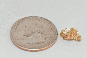Đi dạo công viên, nhặt được kim cương vàng siêu hiếm tiền tỷ