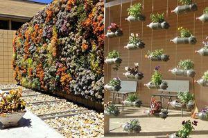 5 ý tưởng làm khu vườn thẳng đứng đẹp mộng mơ mà cực 'chất chơi' ai cũng trầm trồ