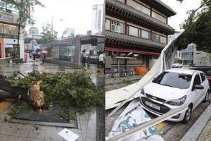 Cây đổ, biển hiệu bị hất tung khi bão Lingling quần thảo Hàn Quốc