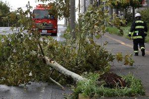 Bão lớn khiến triệu gia đình Nhật mất điện, 100 chuyến bay bị hủy