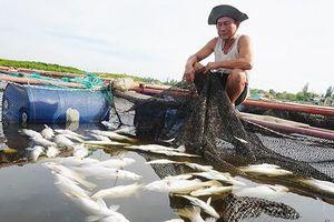 Xót xa hơn 80 tấn cả chết nổi trắng lồng bè trên sông Đò Diệm