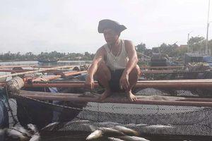Hà Tĩnh: Gần 65 tấn cá chết bất thường sau lũ không rõ nguyên nhân
