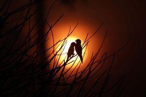 Ảnh động vật ấn tượng: Chim in bóng trời, thằn lằn tắm nắng...