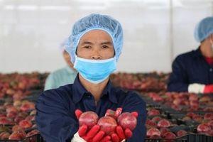 Doveco sẽ thu mua hàng trăm ngàn tấn rau quả mỗi năm ở Tây Nguyên