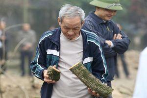2 cây sưa trăm tỉ ở Hà Nội vẫn ế sau 2 lần tổ chức đấu giá