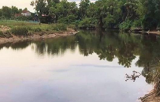 Hoảng hồn phát hiện cá sấu dưới sông Cầu Đông