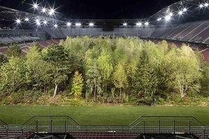 Khu rừng bên trong sân vận động