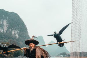 Nghề câu cá bằng chim cốc truyền thống của ngư dân Trung Quốc