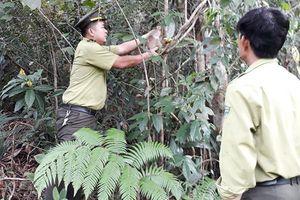 Đà Nẵng: Người dân tự nguyện nộp khỉ, rùa hoang dã để thả về tự nhiên