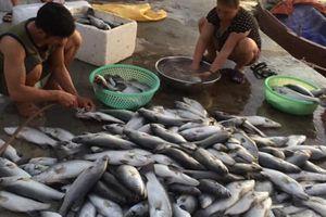 Dân 'méo mặt' vì hơn 80 tấn cá bỗng dưng chết trắng