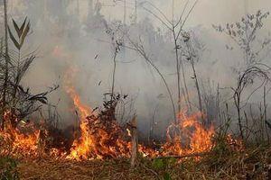 Cháy rừng hoành hành ở Amazon: Chúng ta đang 'đốt cháy' tương lai