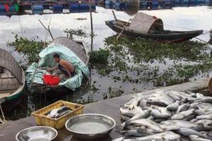 'Truy tìm' nguyên nhân khiến hơn 100 tấn cá chết tại Hà Tĩnh