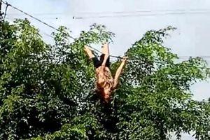 Một phụ nữ vừa đánh đu vừa la hét trên dây điện