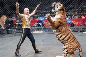 Hổ leo rào bỏ trốn khỏi rạp xiếc khi đang biểu diễn