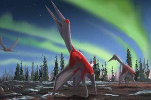 Phát hiện 'Rồng Lạnh' – sinh vật lạ sải cánh 10 m tàn sát muôn loài