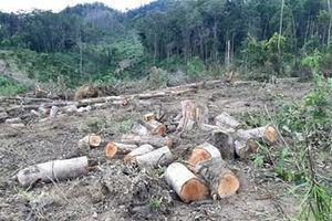 Lại phát hiện phá rừng quy mô lớn tại Lâm Đồng